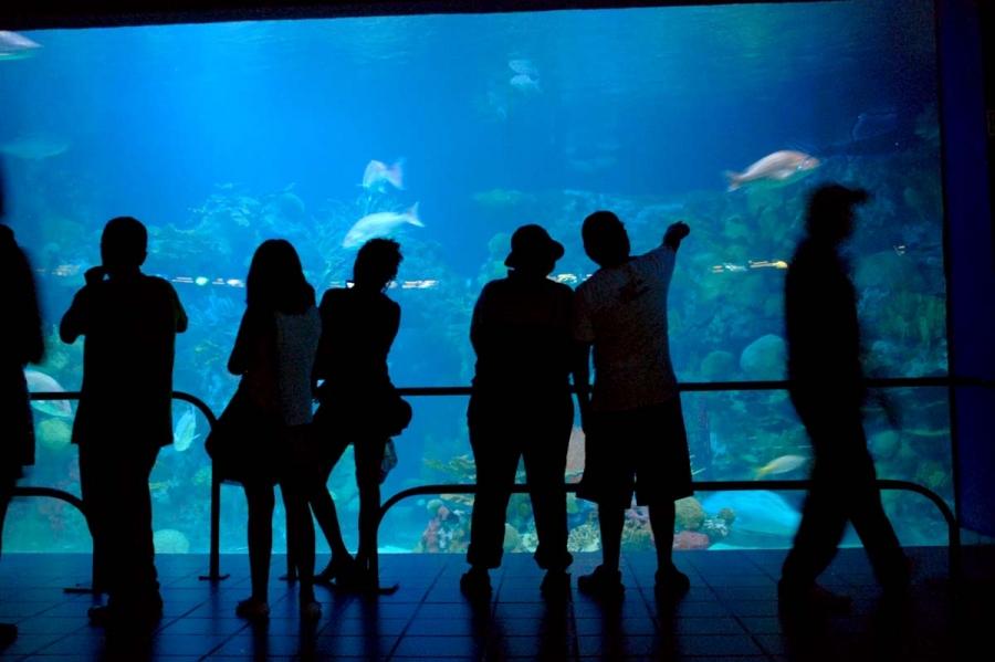 horario y costos del acuario de veracruz recorri2
