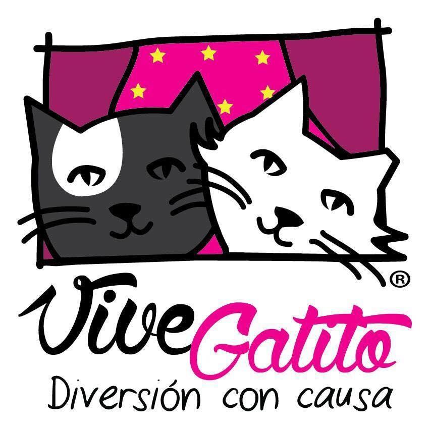 vive gatito